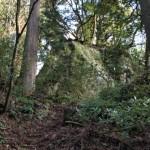 岩屋稲荷神社の巨岩上の御神木